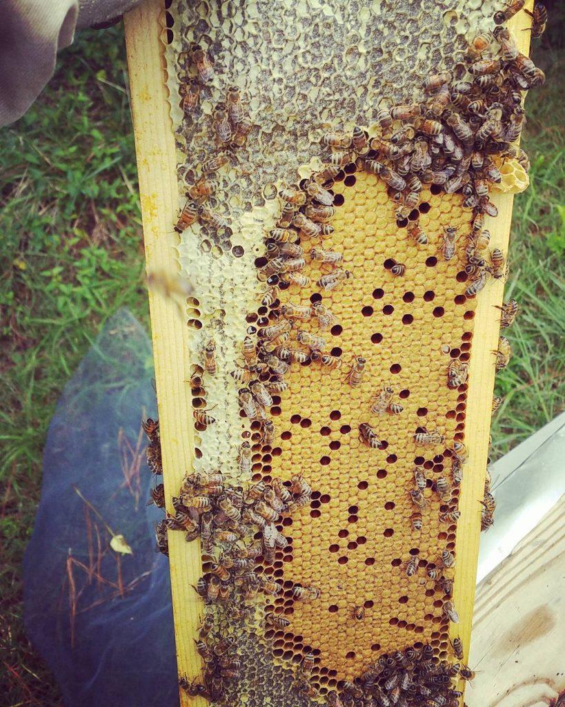 quy trình lấy mật ong và cách tạp tổ cho ong