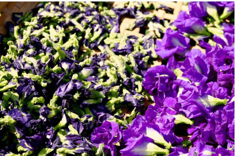 hoa đậu biếc được canh tác tự nhiên, hái thủ công và sấy lnhj nguyên bông